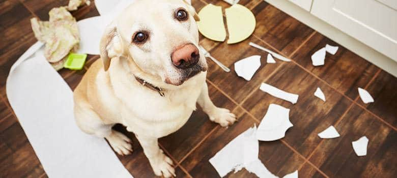Best Flooring for Your Dogs & Cats