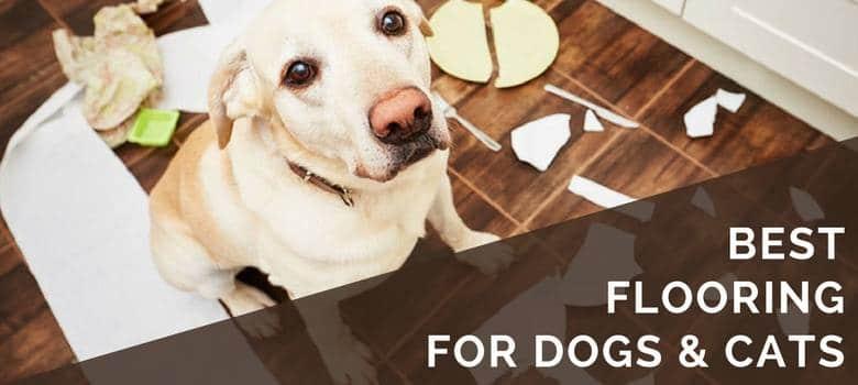 6 Best Pet Friendly Flooring Options For Your Dogs Cats Floor Critics