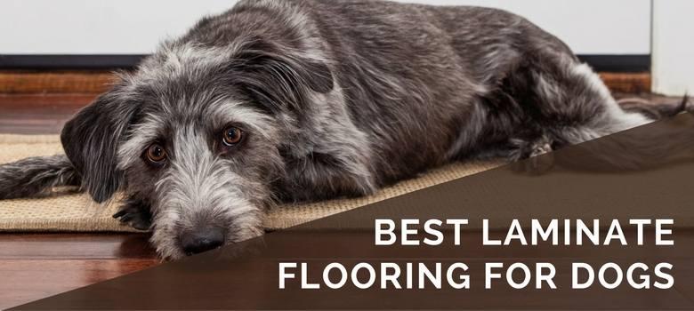best laminate flooring for dogs